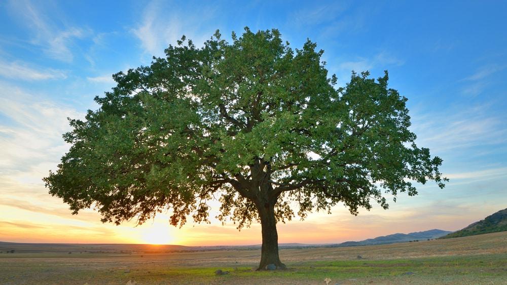 A tarefa de construção da nova árvore da vida, incluindo a genealogia de todas as espécies, é gigantesca. Leia mais no artigo abaixo.