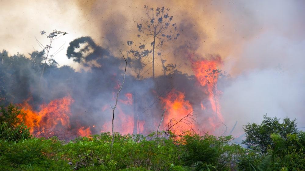 Pode parecer exagero mas nossos netos ficarão ricos se conseguirmos evitar a destruição da floresta amazônica. Leia o porquê no artigo do dr. Drauzio.