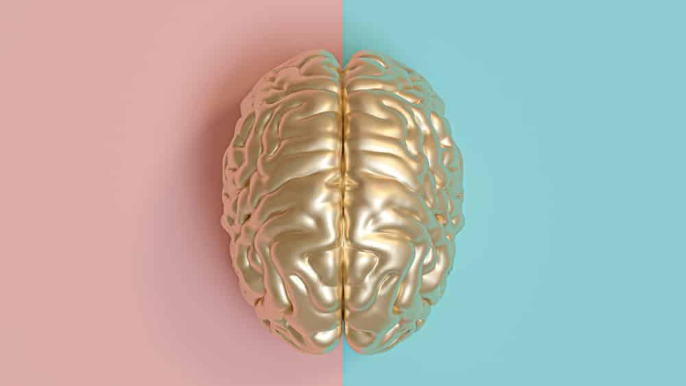 A anatomia do sistema nervoso é moldada pela ação dos hormônios sexuais desde os primeiros anos de vida.
