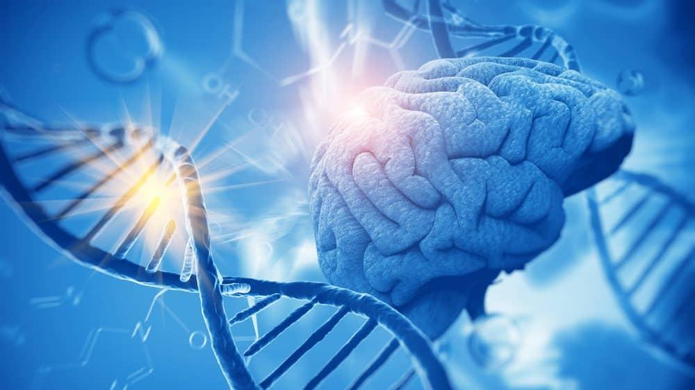 hélice de DNA e cérebro. Genes e consciência têm relação