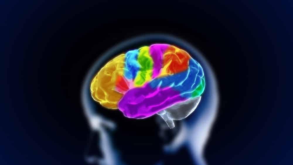 cérebro colorido em 3D. Mapeamento cerebral é evolução da ciência