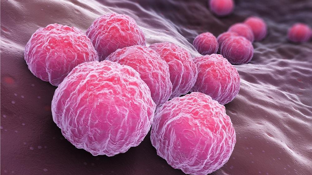 Ilustração da bactéria causadora da clamídia