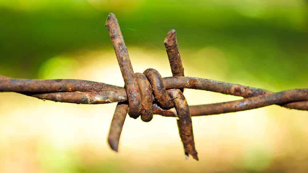 Close de uma ponta de arame farpado enferrujado, umas das principais formas de contaminação do tétano.
