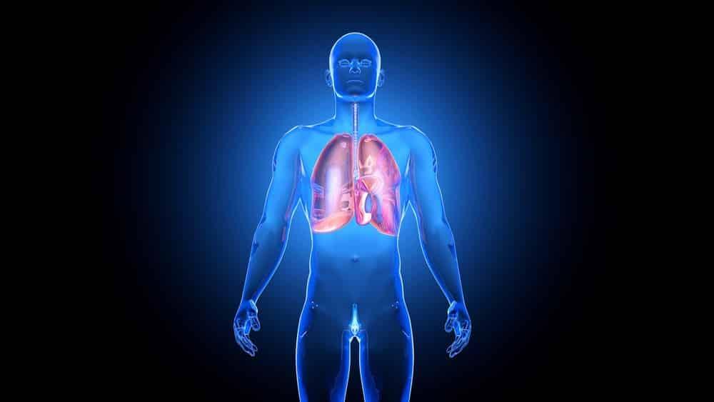 ilustração em 3D de corpo humano, com pulmões em destaque