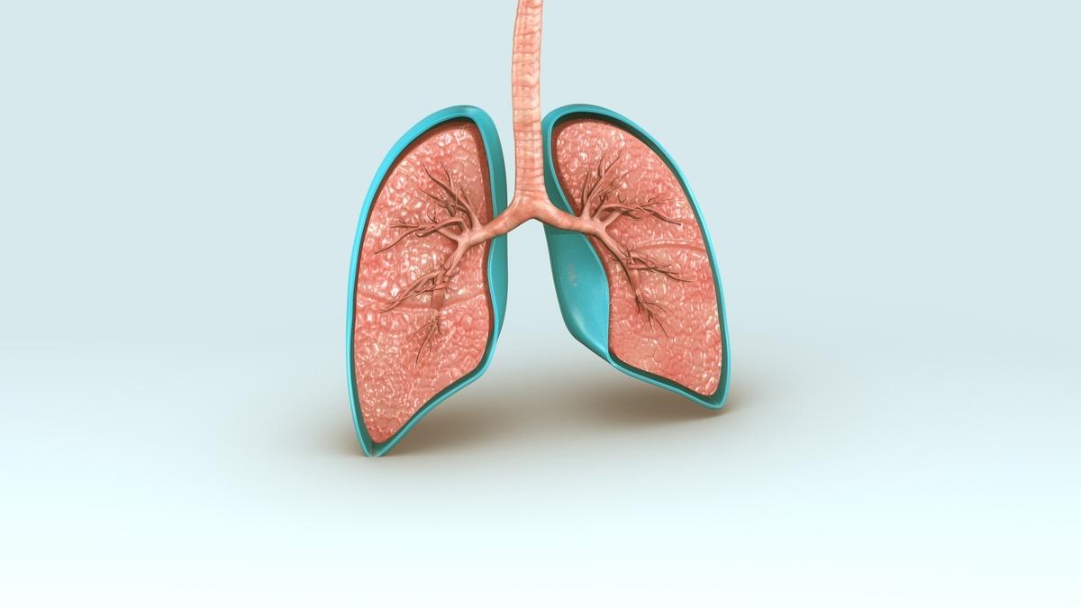 Envelhecimento dos pulmões é um processo natural do corpo, mas o hábito de fumar acelera o declínio das funções do órgão.