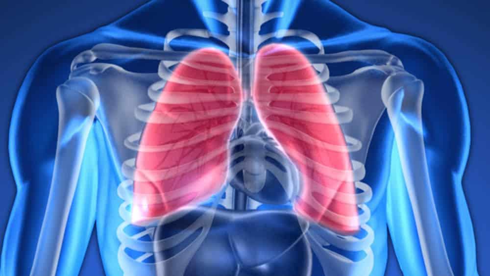 Ilustração digital de pulmões em um corpo humano.