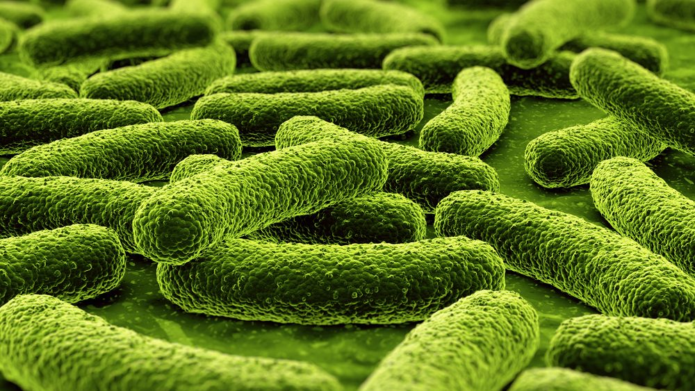 imagem de bactérias em 3D. Há relação entre bactérias e obesidade
