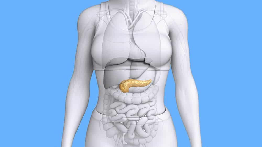 Ilustração de corpo feminino com pâncreas em destaque.