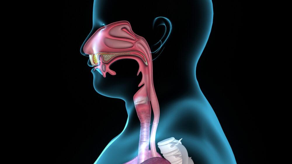 Oanel de Waldeyer protege a entrada dos tubosdigestivo e respiratório dos agentes do meio externo.