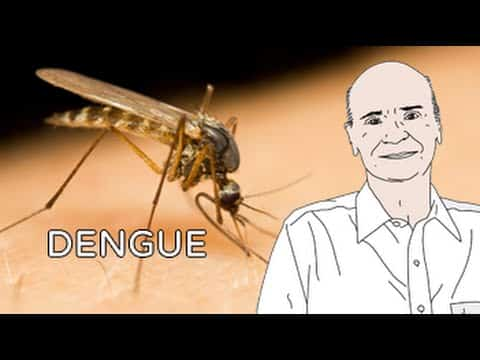 Mosquito da dengue, Aedes aegypti, e uma ilustração do dr. Drauzio Varella ao lado.