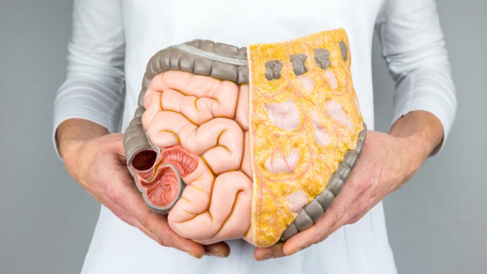 O intestino delgado faz parte do sistema digestório e é composto de três partes: duodeno, jejuno e íleo.