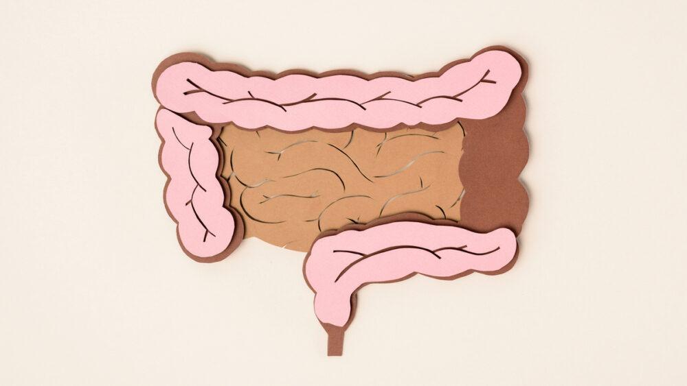 O cólon corresponde a pare central do intestino grosso e está dividido em cólon ascendente, transverso, descendente e sigmoide.