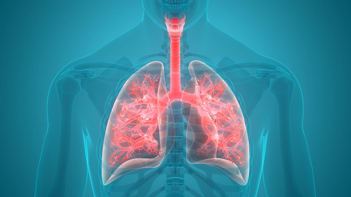 Os brônquios têm como função principal encaminhar o ar a traqueia e aos pulmões.