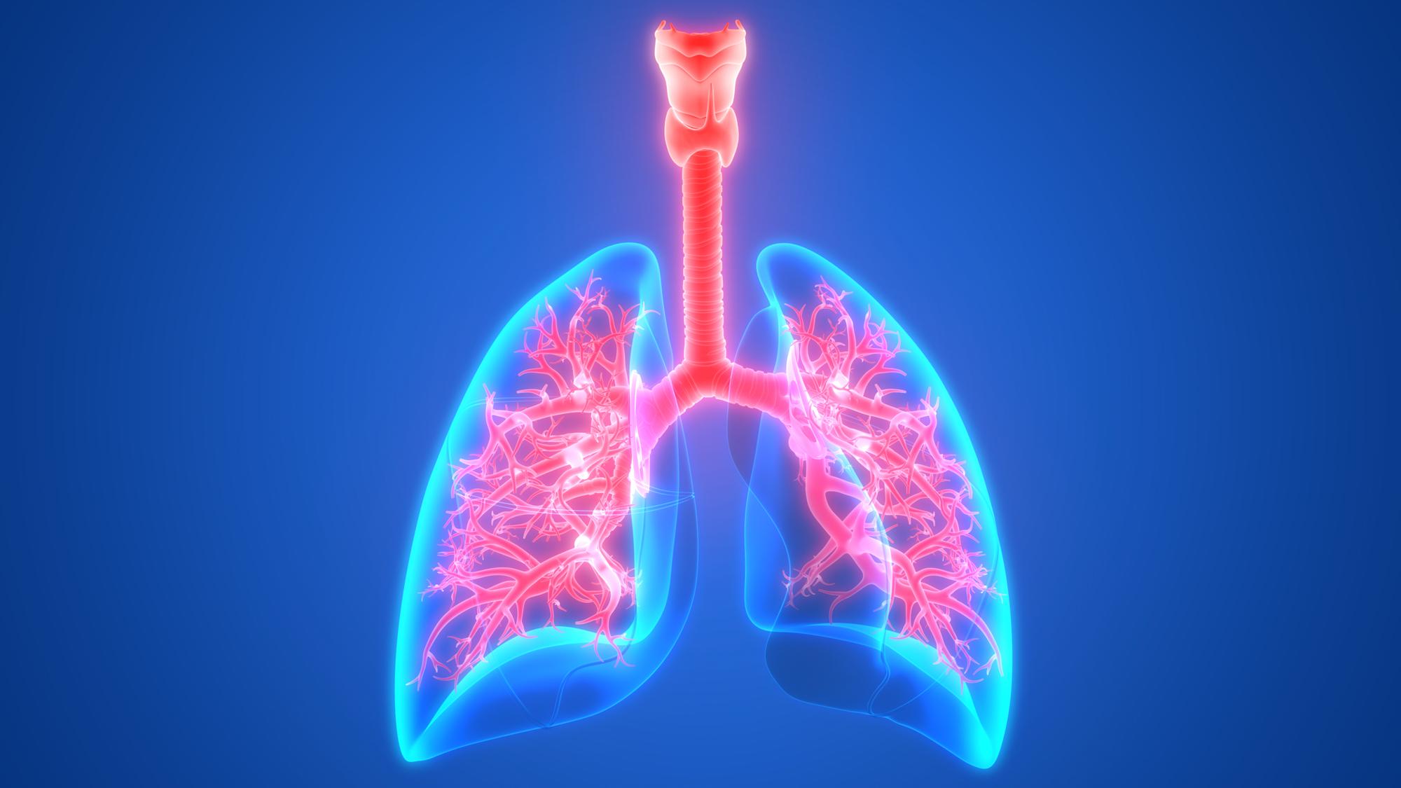 Os bronquíolos têm como funçãotransportar o ar até os alvéolos pulmonares, onde ocorre a hematose (troca gasosa).
