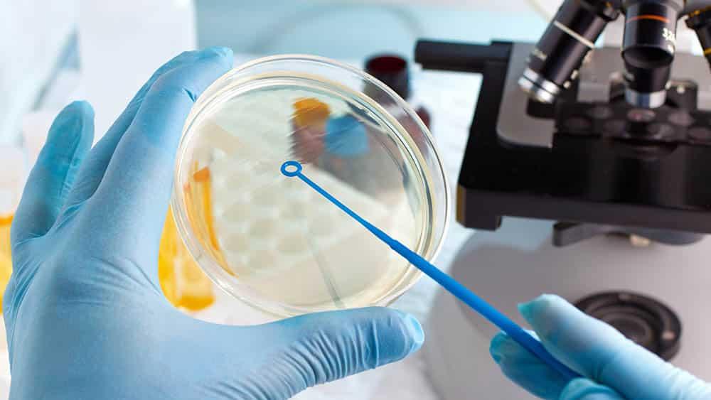 laboratorio microscopio placa petri