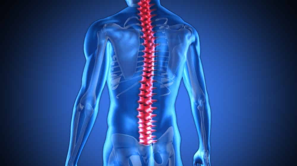 desenho em 3D de coluna vertebral. mielite transversa aguda afeta a medula espinhal